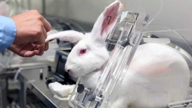 Ilustrasi kelinci percobaan