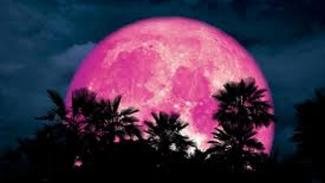 PInk Moon.