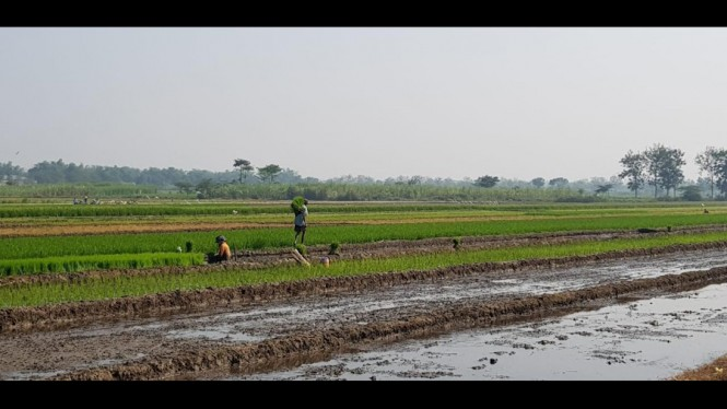 Lahan pertanian Petani Kota Baubau.
