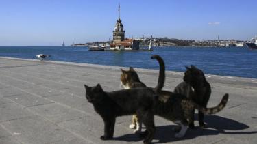 https://thumb.viva.co.id/media/frontend/thumbs3/2020/04/10/5e907ec08ef7e-virus-corona-bagaimana-nasib-ribuan-kucing-liar-hewan-kesayangan-warga-istanbul-turki-di-tengah-pandemi_375_211.jpg