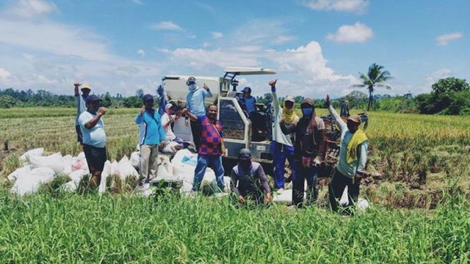 Kelompok tani di Kabupaten Nabire, Provinsi Papua melakukan Panen padi