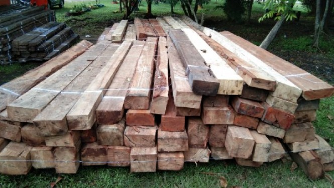 Kasus ilegal logging di Kalimantan Barat