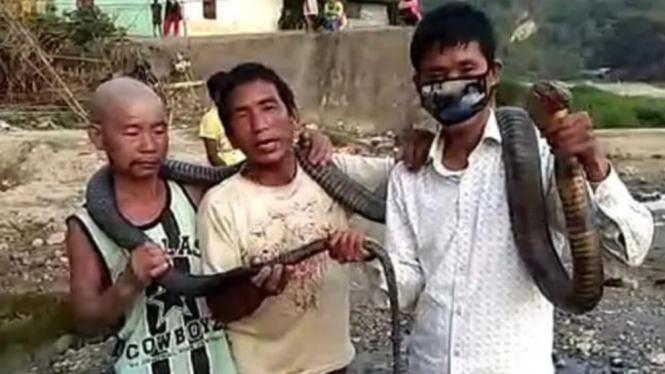 Sekelompok pemburu di India nekat membunuh ular kobra.