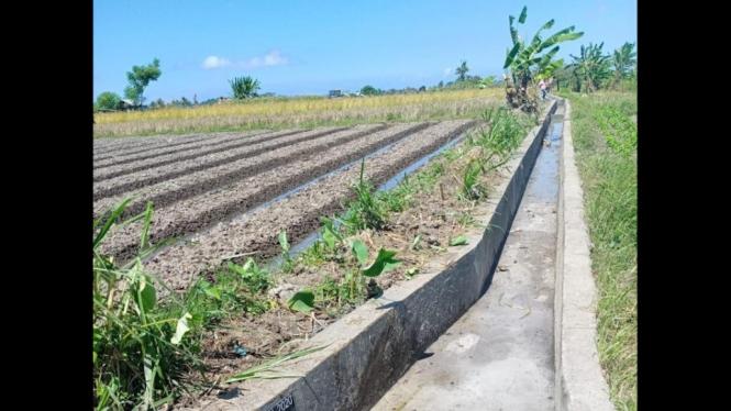 Jaringan irigasi pertanian.