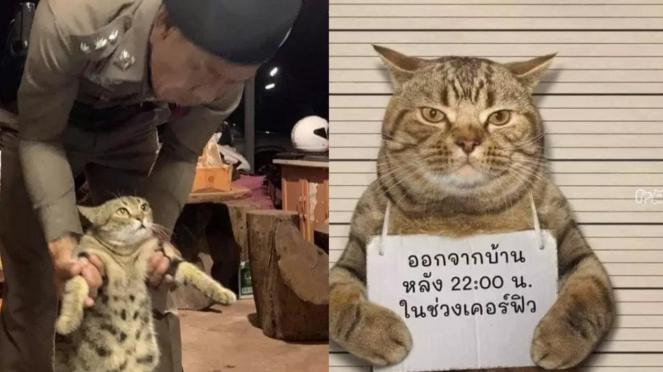 Kucing ditangkap karena melanggar jam malam.