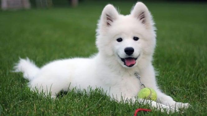 Jenis anjing.