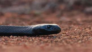 VIVALife: Ilustrasi Snake