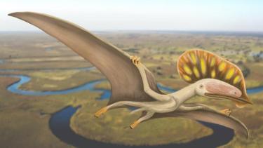https://thumb.viva.co.id/media/frontend/thumbs3/2020/05/29/5ed0c3978eb12-fosil-reptil-terbang-ptesaurus-dengan-jambul-besar-untuk-daya-tarik-seksual-ditemukan-di-inggris_375_211.jpg