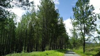 Hutan di Poso.