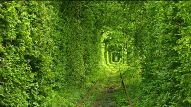 Tunnel of Love, Terowongan jalur kereta di Klevan, Ukraina