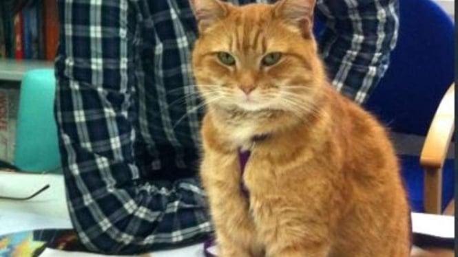 Kucing Bob yang viral dan trending