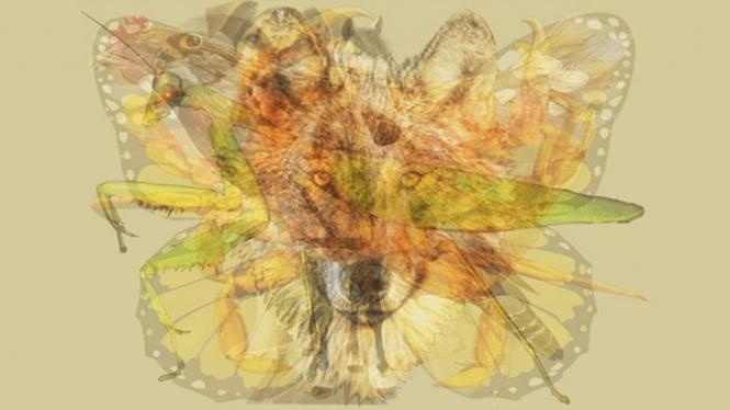 Ilustrasi berbagai hewan.