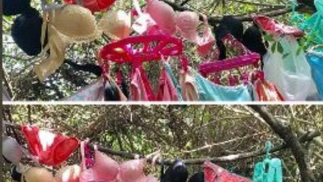 Maling jemuran pakaian dalam dikecam netizen