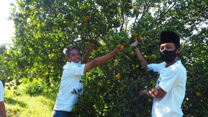 BRI dukung petani jeruk di Malang.