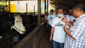 BRI bantu peternak sapi perah di Kediri.