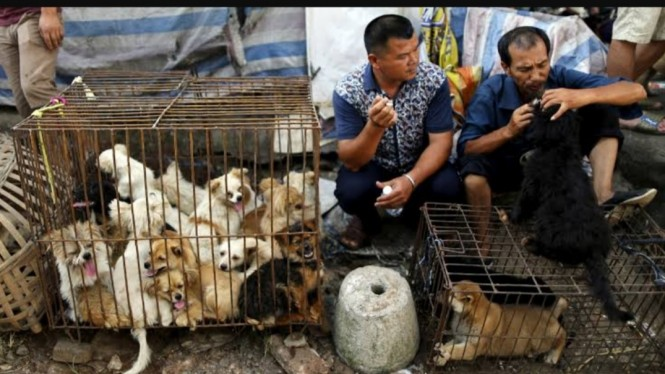Suasana di Festival Daging Anjing di Yulin, China.