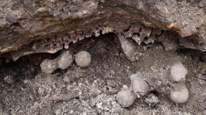 VIVA Militer: Tengkoran tentara Nazi Jerman di kuburan massal Rusia