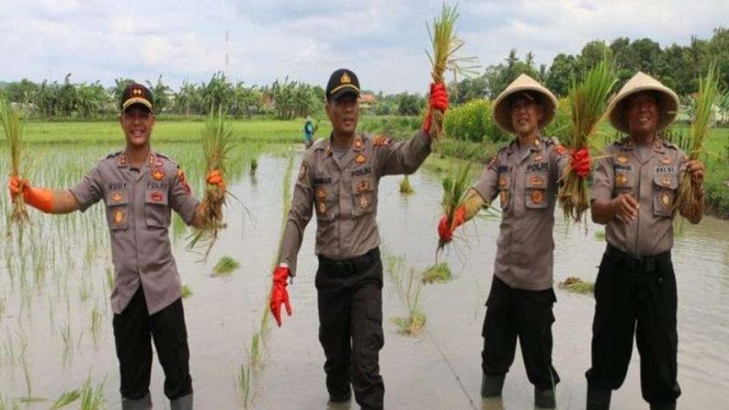 Anggota Polri menanam padi