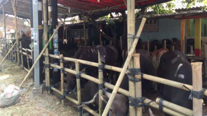 Pedagang hewan kurban akan menjalani rapid test, di Bekasi, Jabar.