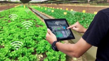 https://thumb.viva.co.id/media/frontend/thumbs3/2020/06/29/5ef9e5d762003-program-food-estate-potensi-lahirkan-new-entrepreneur_375_211.jpg
