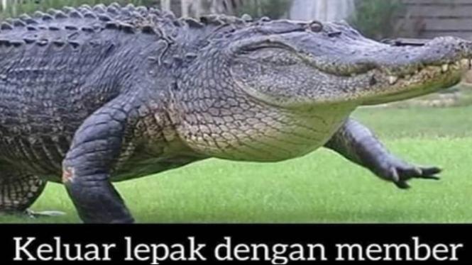 Meme buaya (Instagram/errafazira)