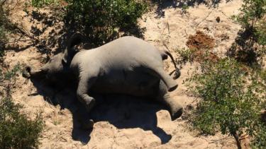 https://thumb.viva.co.id/media/frontend/thumbs3/2020/07/02/5efd86e08d2cc-ratusan-gajah-mati-misterius-di-botswana-benar-benar-belum-pernah-terjadi-sebelumnya_375_211.jpg