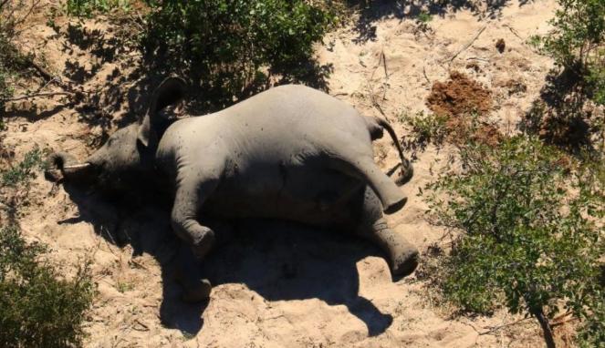 https://thumb.viva.co.id/media/frontend/thumbs3/2020/07/02/5efd86e08d2cc-ratusan-gajah-mati-misterius-di-botswana-benar-benar-belum-pernah-terjadi-sebelumnya_663_382.jpg