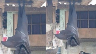 kelelawar raksasa