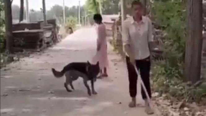 Seekor anjing bantu orang buta berjalan.