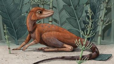 https://thumb.viva.co.id/media/frontend/thumbs3/2020/07/09/5f06ad6781768-nenek-moyang-dinosaurus-kemungkinan-berukuran-kecil_375_211.jpg