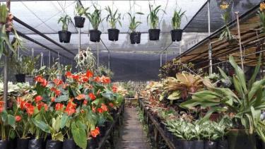 5f081129701d0 penjual tanaman hias 375 211