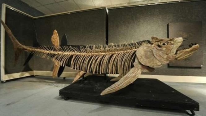 Fosil Ikan Predator Raksasa