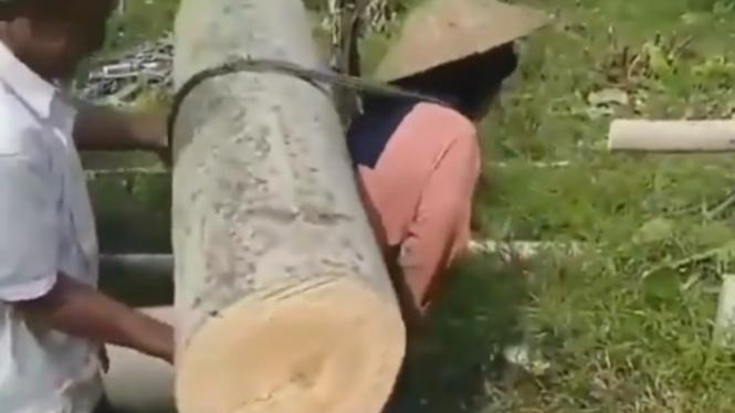 Viral, seorang ibu gendong batang pohon besar