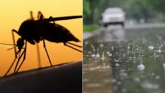 Nyamuk dan musim hujan