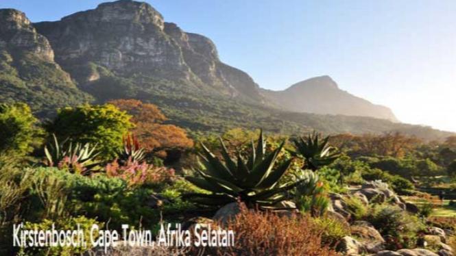 Kirstenbosch, Cape Town, Afrika Selatan