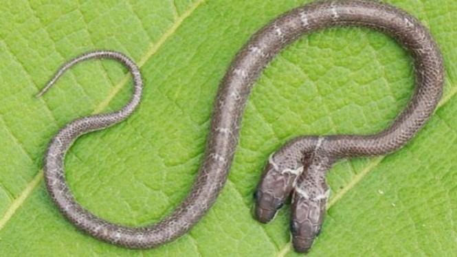 Ilustrasi mimpi ular.