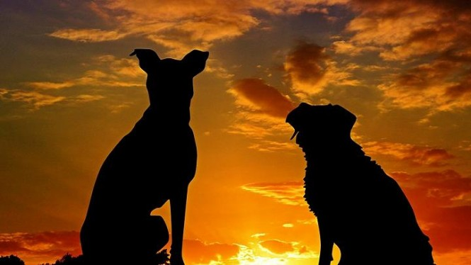Anjing (ilustrasi)