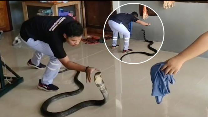 Ular king cobra di dalam rumah.