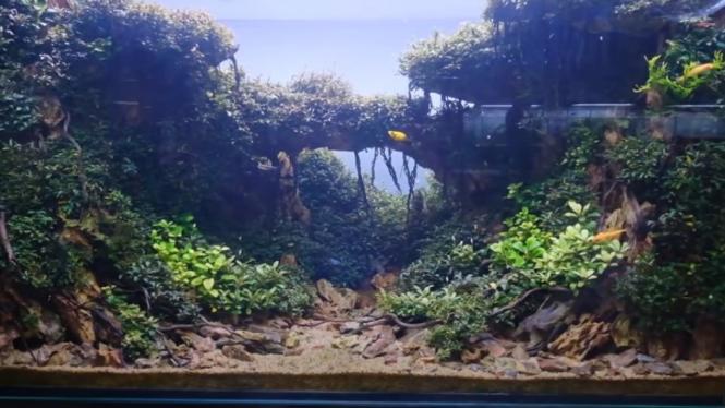 Aquascape Lagi Tren Harganya Bisa Capai Rp125 Juta Apa Istimewanya