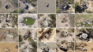 Kematian ratusan gajah memiliki keterkaitan dengan perubahan iklim.