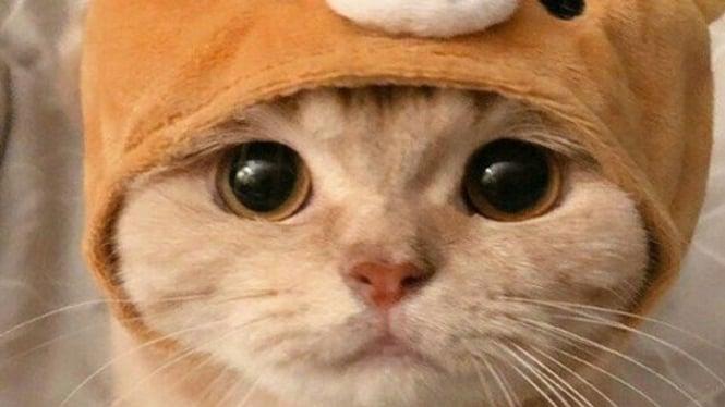 kucing terlucu