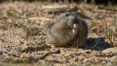 https://thumb.viva.co.id/media/frontend/thumbs3/2020/10/12/5f83e08426457-apa-yang-kita-pelajari-dari-tikus-lucu-arktik-ini_375_211.jpg