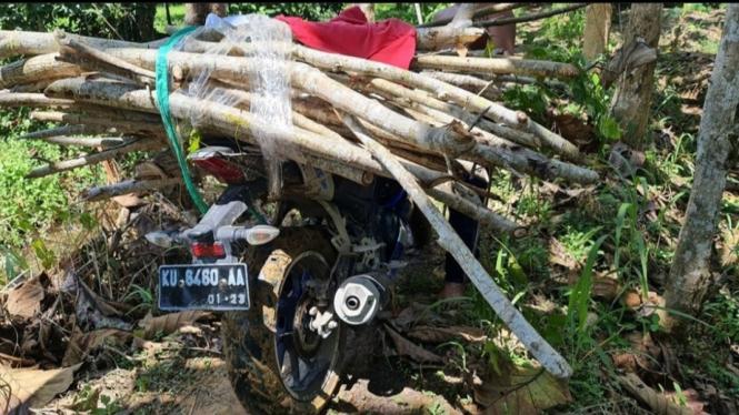 Yamaha R15 dipakai angkut kayu di hutan