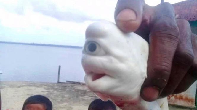 Ikan hiu bermata aneh