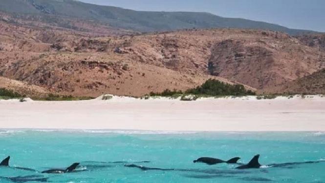 Pulau Socotra.