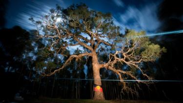 https://thumb.viva.co.id/media/frontend/thumbs3/2020/10/27/5f97f61600fe8-pohon-keramat-suku-aborigin-djab-wurrung-tempat-perempuan-suku-asli-australia-melahirkan-dan-kubur-plasenta-ditebang-demi-pembangunan-jalan-raya-raya_375_211.jpg