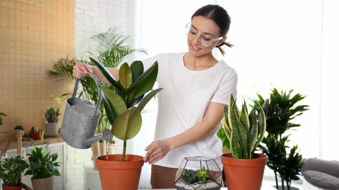 Ilustrasi tanaman.