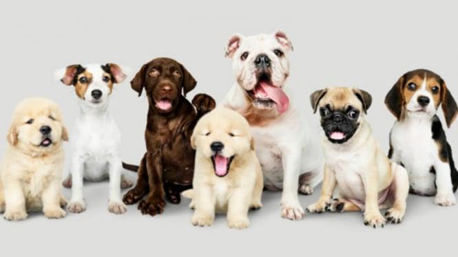 Ilustrasi hewan peliharaan/anjing.