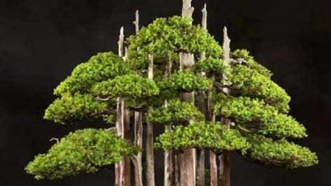 bonsai goshin