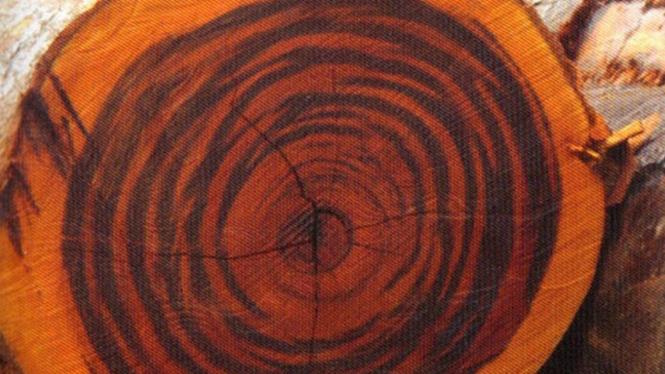kayu tiger wood.